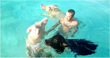 Swim with the Pigs at Breezy Hill, Exuma, Bahamas